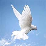 freedom-kabotar-azadi-rahrawan